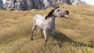 Horse White View