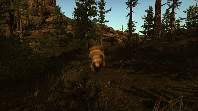 File:Rust bear.jpg