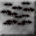 File:Unliving swarm.png