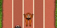 Frog Racing