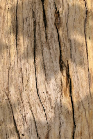 File:Dry wood.png