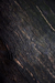 Habitat Black Tree