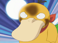 Emily Psyduck Focus Punch