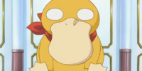 Emily's Psyduck