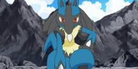 Riley's Lucario (anime)