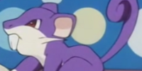 Temacu's father's Rattata