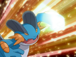 Swampert Focus Punch
