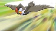 Ash Staraptor Quick Attack