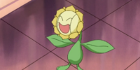Nando's Sunflora
