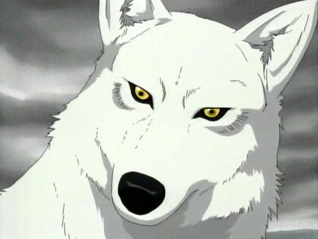File:Red wolf8.jpg