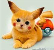 Cute Pikachu (Cat)