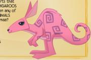 Mxcp185px-Kangaroo 2
