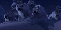Wolves (Frozen)