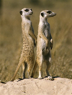 File:Timon and Billy.jpg
