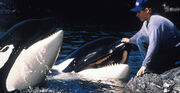 Free-willy2 13029191