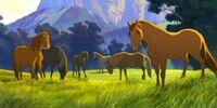 Spirit's herd