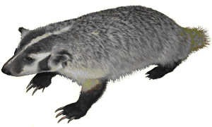 File:Badgerdigger in Beast Mode.jpg