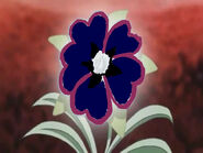 Black heart flower