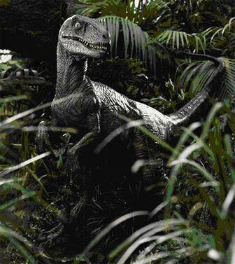 Velociraptor antirrhopus 2