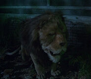 The Cowardly Lion (Return to Oz)