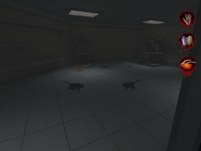 Cats in Creature Control Center and Pets