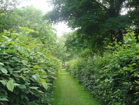 Lambeth-palace-garden1