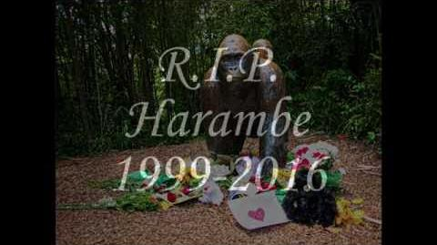 Harambe Tribute
