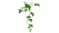 Ivy-ingredient.png
