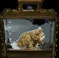Natterjack-toad-lrg.png