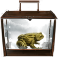 Common-toad-lrg.png