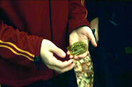 Harry-potter-gillyweed