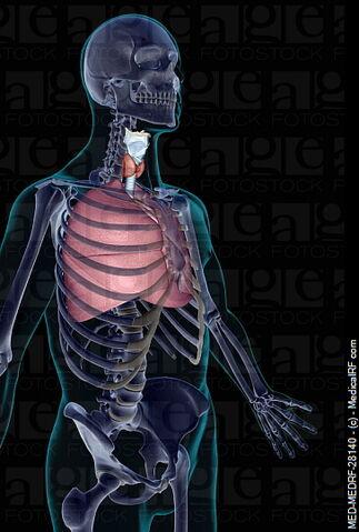 File:Respiratory.jpg