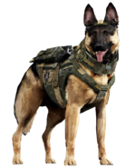 Riley render CoDG