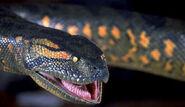 Anaconda2