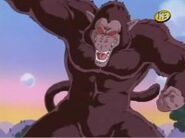 Great Ape DB