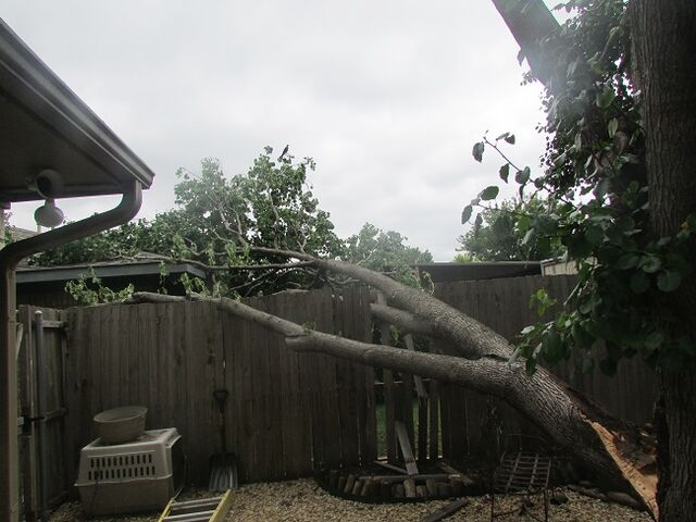 File:Dallas Tree Service - 214- 556-5079.jpeg