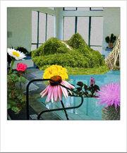 FlowersPool