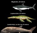 Prehistoric Animal Sizes