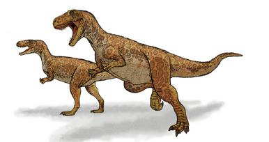 Megalosaurus new