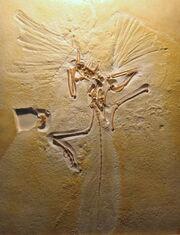 London archaeopteryx specimen