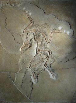 Berlin archaeopteryx