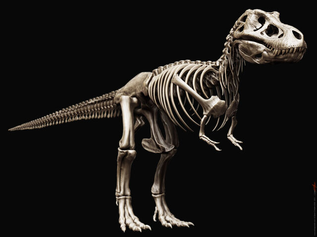 File:Tyrannosaurus rex skeleton by airt-d39cpb6.jpg