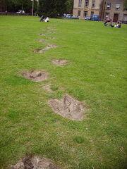 Megalosaurus footprints