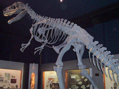 File:Allosaurus skeleton.jpg