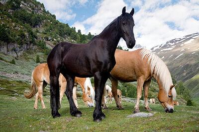 Horse03