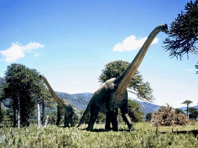File:Dino 020-1-.jpg