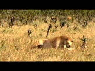 Sabrina and her dead cub