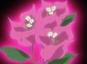HPC16.Flower