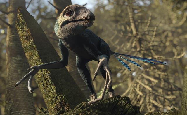 File:Epidexipteryx 1.jpg