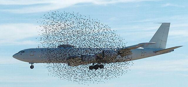 File:Swarm.jpg